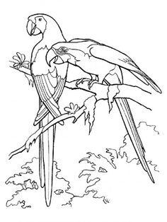 Printable Rainforest Animal Coloring Pages