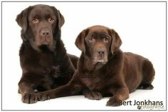 One of my favourites of Hessel and Millie.
