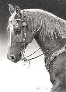 "Chestnut Glow by Mary Ross Buchholz Graphite & Charcoal ~ 21.5"" x 15.5"""