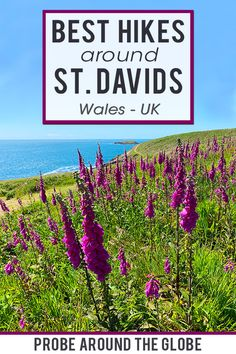 The smallest city in the UK offers a lot of things to do. Davids has great walking trails and beaches. Read my 10 best things to do in St. Backpacking Europe, Europe Travel Tips, Travel Guides, Europe Packing, Packing Lists, Travel Deals, Travel Hacks, Travel Packing, Travel Essentials