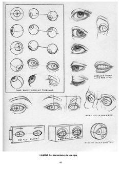 48 LAMINA 24. Mecanismo de los ojos
