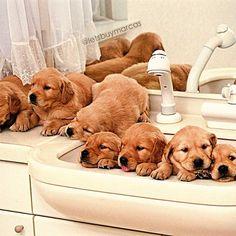 Hora do Banho ! #love#dogs #Padgram
