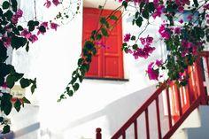 bougainvillea heaven in Mykonos