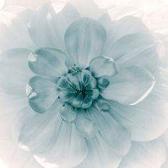 Nieuw in mijn Werk aan de Muur shop: Bloemenhart van de dahlia, monochroom