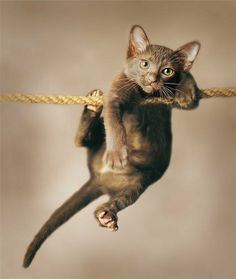 Help now! pleeease! I didnt know that tihht rope walking is for profesionals...