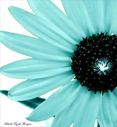 Aquamarine Sunflower Burst