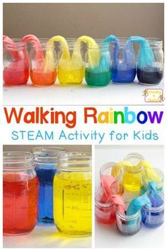 Kids will love making their very own walking rainbow from just three colors. This amazing walking rainbow experiment is the most fun walking water experiment ever! You'll have a blast with the rainbow walking water. Kid Science, At Home Science Experiments, Teaching Science, Kindergarten Science Experiments, Kindergarten Stem, Science Education, Best Science Fair Projects, Experiments For Kids Easy, Weather Experiments
