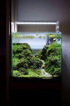 Aquarium Lamp, Aquarium Garden, Aquarium Landscape, Nature Aquarium, Aquarium Design, Garden Terrarium, Planted Aquarium, Betta Fish Tank, Aquarium Fish Tank