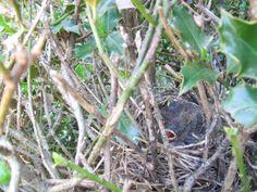 Bird Nest #2