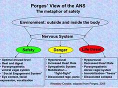 third branch of the autonomic nervous system safety or social - Google Search