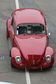 Vw Bus, Volkswagen Beetle, Beetle Car, Vw Camper, Jaguar Cars, Vw Classic, Aston Martin Dbs, Vw Vintage, Vw Beetles