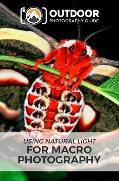 Macro Photography: Using Natural Light | OPG