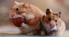 Hey hamsters, it's called SENSIBLE BITES! Ever heard of it? via via via via via via via via via via via via via via via via via via via via via Previously: Hamster Butts (18 Pics)