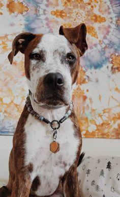 Your place to buy and sell all things handmade Gifts For Pet Lovers, Pet Gifts, Beaded Collar, Pitbulls, Porcelain, Mint, Ceramics, Beads, Abstract