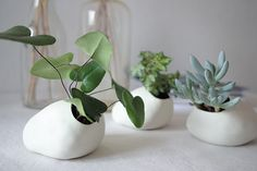 these flowerpots are great. for my new little plants perhaps?