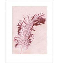 Pernille Folcarelli - Feather, Marsala 30x40