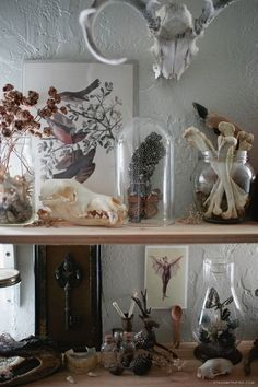 """Neat See? Collection of bleached """"food bones""""… also good things to collect would be rusty metal parts and feathers… The post See? Collection of bleached """"food bones""""… also good things to collec… appeared first on 99 Decor . Wasp Nest, Diy Home Decor, Room Decor, Creepy Home Decor, Cabinet Of Curiosities, Natural Curiosities, Witch House, Interior Decorating, Interior Design"""