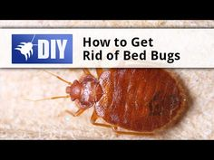 Good Our DIY Bed Bug Treatment Guide Will Teach You Step By Step How To Properly Get  Rid Of Bed Bugs And Keep Them Out Of Your Home And Furniture.