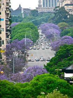 ► Jacarandas in Buenos Aires, Argentina -- DONE! Places Around The World, Travel Around The World, Around The Worlds, Argentine Buenos Aires, Places To Travel, Places To See, Wonderful Places, Beautiful Places, Argentina Travel