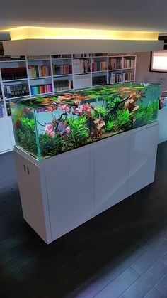 Diskus Aquarium, Aquarium Garden, Aquarium Landscape, Aquarium Design, Planted Aquarium, Aquascaping, Conception Aquarium, Discus Fish For Sale, Discus Tank