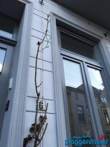 Die fachgerechte Aufbereitung von Holzfenstern ist eine oft vernachlässigte Disziplin unter Malern. Mann muss diesen Bereich der Fassade sehr ernst nehmen, um nachhaltig gute Ergebnisse zu erzielen. In Bremen sind wir der Maler für Qualität!