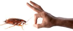 Pest control services in #Bangalore http://www.gapoon.com/