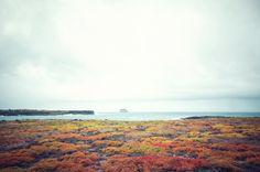 Galapagos Islands by Lauren Krieger, via Behance