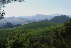 The beautiful Napa Valley