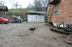 Village Ljutice in Serbia, real household, a dog always in yard to keep the hose