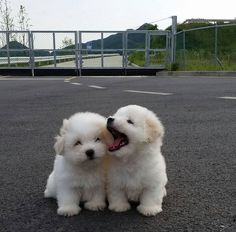 Any dogs and puppies that are cute. See more ideas about Cute Dogs, Cute puppies Tags: Baby Animals Super Cute, Cute Little Animals, Cute Funny Animals, Cute Little Puppies, Cute Dogs And Puppies, Adorable Puppies, Doggies, Puppies Puppies, Cute Baby Dogs