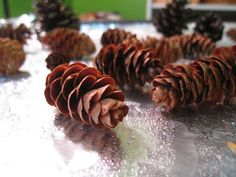 What is it about pine cones that I so adore? I find them so lovely, so quintessentially symbolic of the natural world around us. I love taking a walk through the woods and hunting for the perfect l…