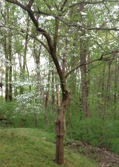 Behind Our Cottage at John James Audubon State Park Henderson, KY
