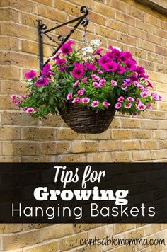 Check out these tips for growing a hanging basket to help you have a beautiful basket this summer! Check out these tips for growing hanging baskets to help you create a beautiful bouquet of flowers. Petunia Hanging Baskets, Plants For Hanging Baskets, Hanging Flower Baskets, Hanging Planters Outdoor, Fall Planters, Diy Hanging, Container Flowers, Container Plants, Container Gardening