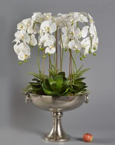 White Orchids in Large Aluminium Bowl Artificial Green Wall, Artificial Orchids, Artificial Flower Arrangements, Floral Arrangements, Things That Bounce, Things To Come, Spider Plants, Phalaenopsis Orchid, White Orchids