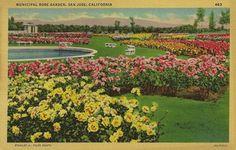 San Jose Ca Municipal Rose Garden Vintage Postcard