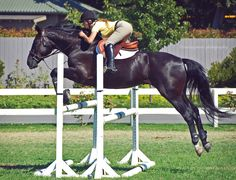this morning me and bullet jumping - Allie Hunter Horse, Horse Magazine, Star Stable, English Riding, Hunter Jumper, Trail Riding, To Infinity And Beyond, Show Jumping, Horse Pictures
