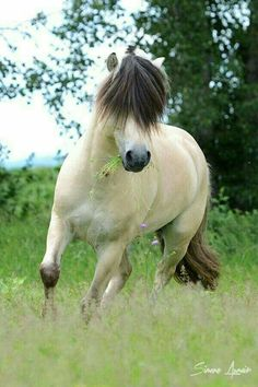 Bushy mane horse in the sweet green grass.