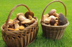 Hub, Portobello, Kitchen Hacks, Basket, Cooking, Blog, Mushrooms, Kochen, Blogging