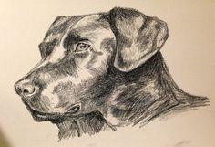 Black labrador in charcoal Black Labrador, Schnauzer, Charcoal, Moose Art, To Draw, Black Labrador Retriever, Schnauzers, Black Labs, Mini Schnauzer