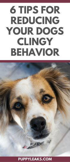 Do You Have a Velcro Dog? Does Your Dog Follow You Everywhere? Here's 6 Ways to Reduce Your Dogs Clingy Behavior.