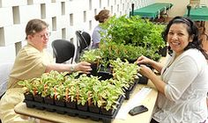 Volunteers help tag more than 14,000 plants for the Washington University Herb Sale, May 2011.
