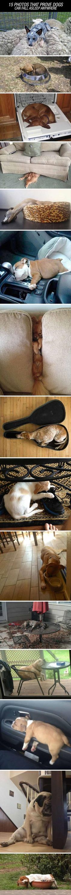 Proof Dogs Can Sleep Just About Anywhere 15 Pics