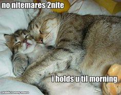 sweet little kitties cuddling