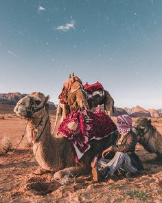 Camels, Sunset, Photo And Video, Friends, World, Travel, Animals, Beautiful, Instagram
