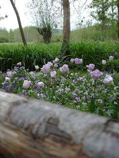 garden of Claude Monet, Giverny, Paris