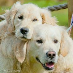 Finlay & Bobbie
