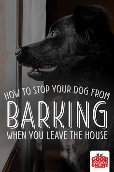 How To Stop Dog Barking While Gone My Dog Barks All Day While I M