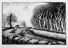 Mistle Thrush Song  by Tim Southall Etching, aquatint.