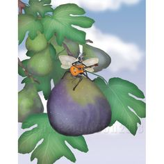 The Fig Wasp Ramble print by FullFrogMoon on Etsy, $25.00