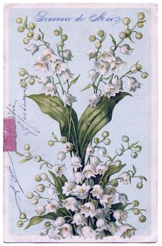 Gorgeous French Lily of the Valley Image - The Graphics Fairy